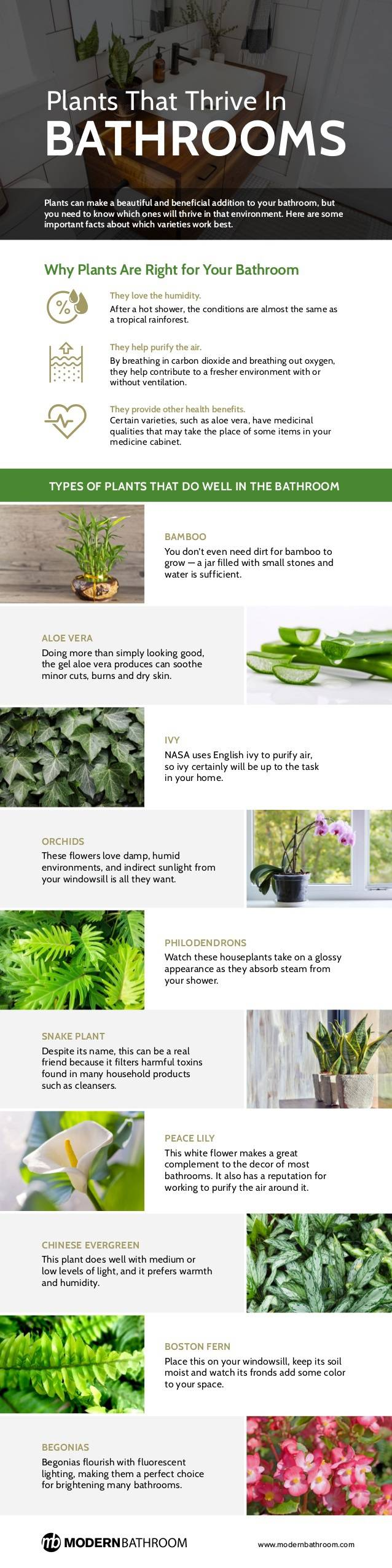 plants-that-thrive-in-bathrooms